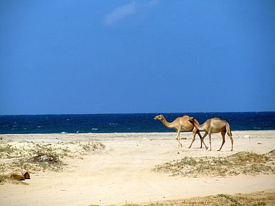 Beach in Somaliland