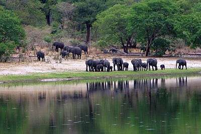 Elephants in the Caprivi Strip