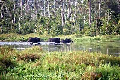 Congo, elephants