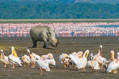 Lake Nakuru, rhino and flamingos