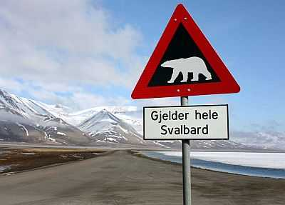 Beware of polar bears!