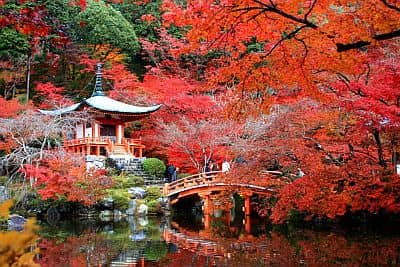 Temple in autumn in Kyoto